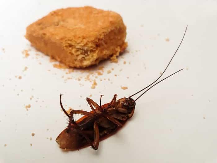 Desinsectación de plagas de cucarachas