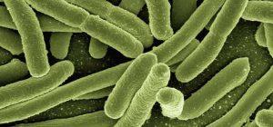 Acumulación de gérmenes para tratar con desinfección y esterilización
