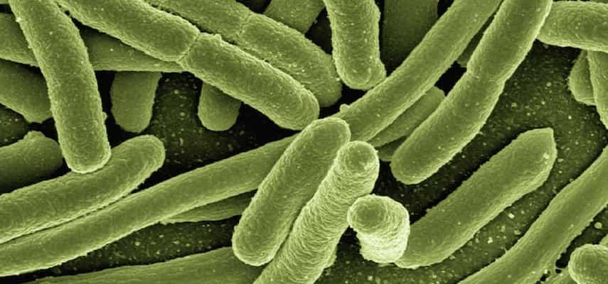 Diferencias Entre Desinfección, Esterilización E Higienización