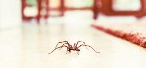 Araña en el salón de casa