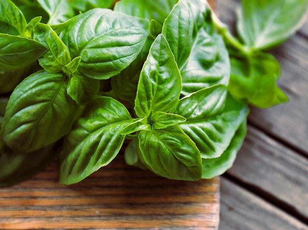 Albahaca como remedio natural para tratar las plagas de insectos de las plantas