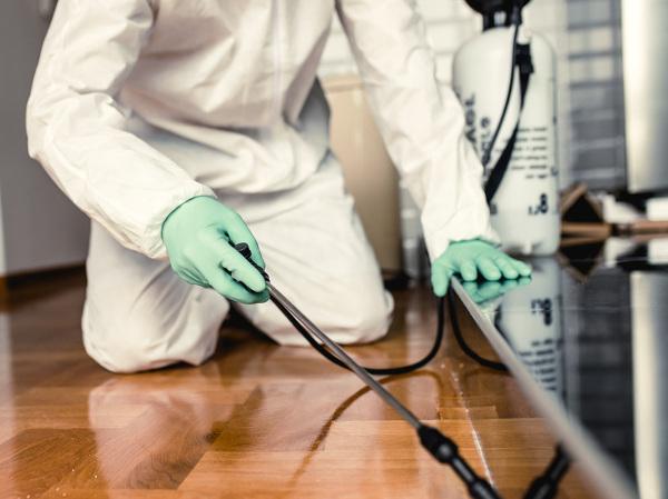 Fumigación de una plaga en todos los rincones de una estancia de la vivienda