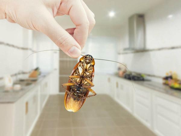 Eliminación de las cucarachas en casa