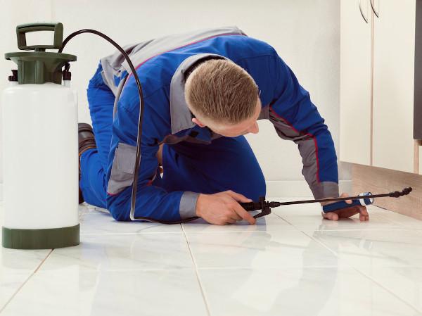 Profesional inspeccionando para detectar una plaga después de limpiar el lugar
