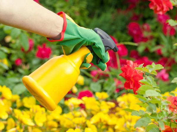 Remedio natural para tratar las plagas de las plantas de casa
