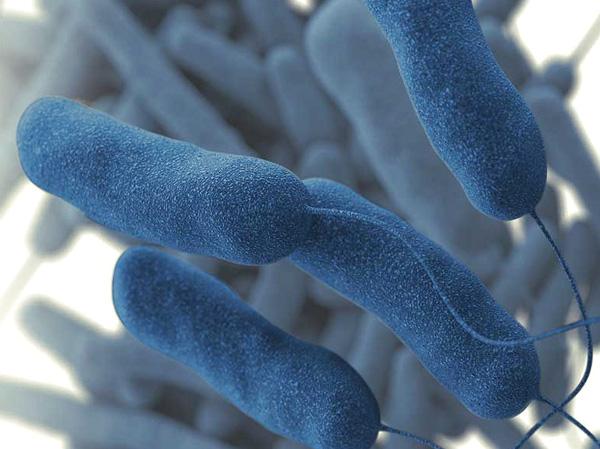 Hacer una limpieza del circuito de aire para evitar bacterias