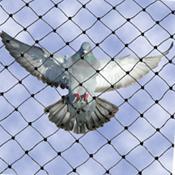 Redes para evitar que aniden las aves en edificios