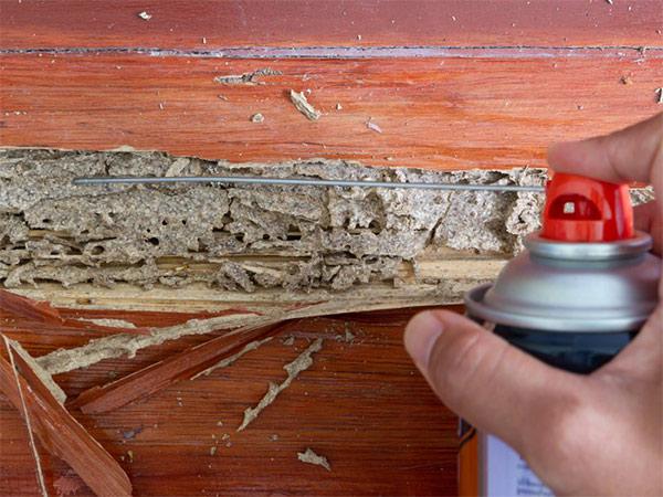 Productos para acabar con las termitas en casa